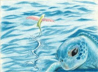Sea Turtle and Flying Fish - Colored Pencil