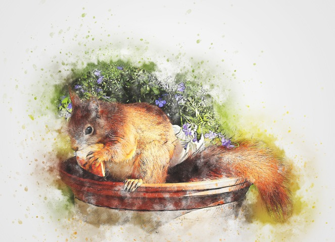 squirrel-2245913_1920