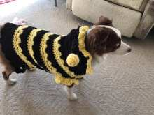 Bumblebee Dog Sweater