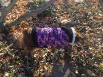 Purple Dog Sweater